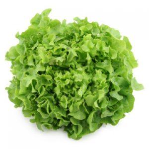green festival lettue